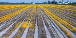 Descaler en Agricultura y ganadería