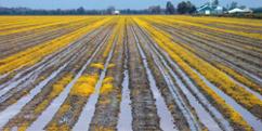 Descalcificación en agricultura